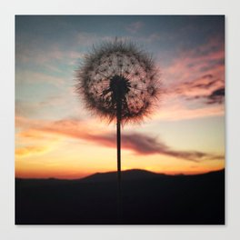 Just Dandy - Square Canvas Print