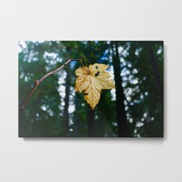 Veiny Leaf in the Humboldt Forest Metal Print