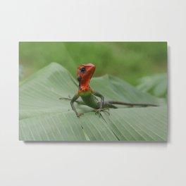 Gecko iguana Red Head Metal Print