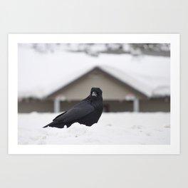 Ravens on the Coquihalla Highway 3 Art Print