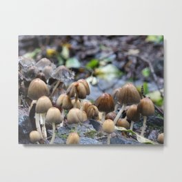 Mushroom City | Nature Photography Metal Print
