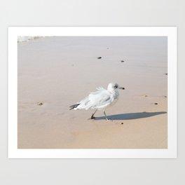 Juvenile Herring Gull Art Print
