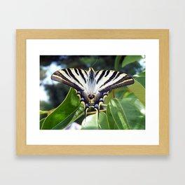Swallowtail Buttterfly Resting on Oleander Leaves Framed Art Print