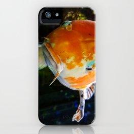 Put a Koi on It! iPhone Case