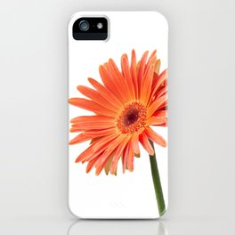 isolated gerbera daisy in the vase iPhone Case