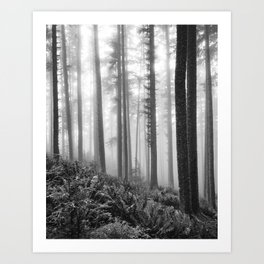 Misty Forest (black and white) Art Print
