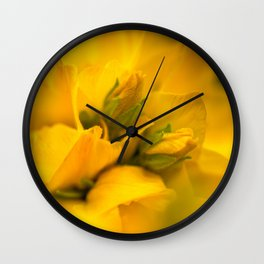 Large yellow loosestrife bloom  Wall Clock