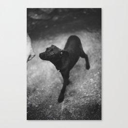 sniff Canvas Print