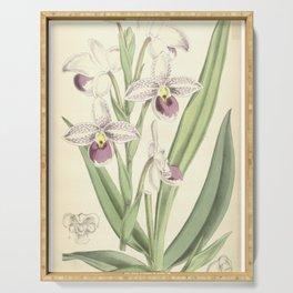 Phragmipedium schlimii (as Cypripedium schlimii) Curtis' 92 (Ser. 3 no. 22) pl. 5614 (1866) Serving Tray
