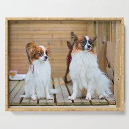 Outdoor portrait of a papillon purebreed dogs sitting on the wooden house Serving Tray