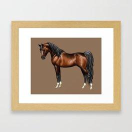Dark Bay Arabian Horse with 4 White Socks Framed Art Print