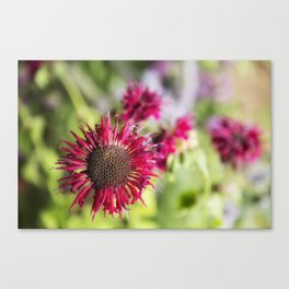 Not Yet Faded Canvas Print