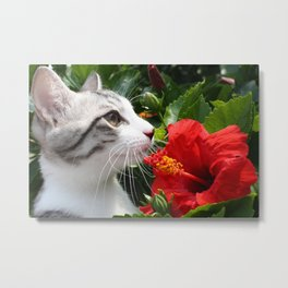 cat and Hibiscus flowers Metal Print