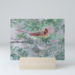 Pretty Female Cardinal Mini Art Print