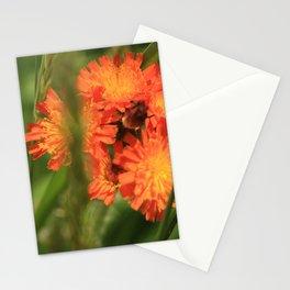 Orange Hawkweed Wildflowers Stationery Cards