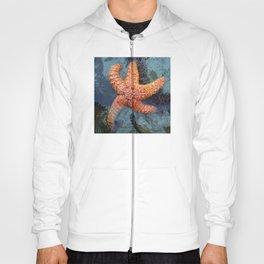 Orange Starfish in Blue Waters Hoody