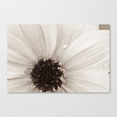 Flower with droplets Canvas Print