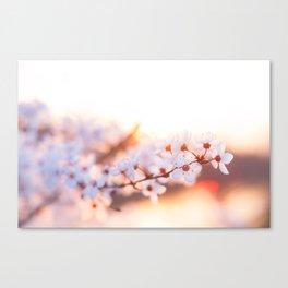 Hello Spring! Canvas Print