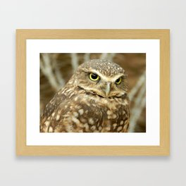 Owl Eyes, They're Watching You Framed Art Print