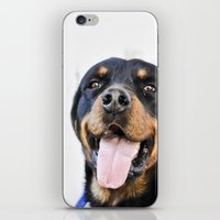 rottweiler iPhone & iPod Skins featuring Happy rottweiler by StarsColdNight