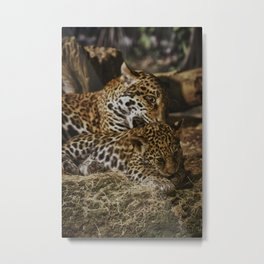 Jaguars: Mother and Baby Metal Print
