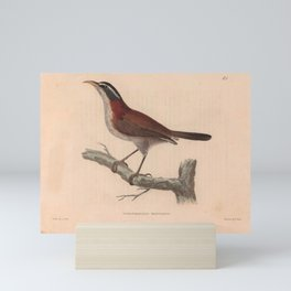 Chestnut backed Scimitar Babbler13 Mini Art Print
