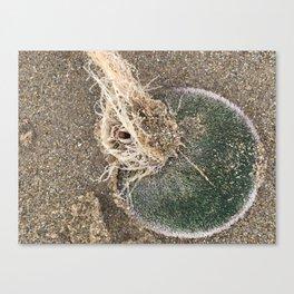 Live Sand Dollar - Pismo Beach, California Canvas Print
