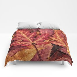 Colorful Autumn Maple Leaf Indian Summer Red Comforters