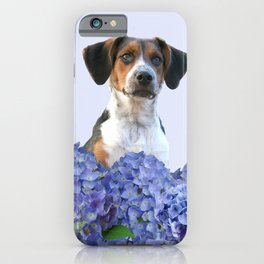 Hydrangea Blossoms  - Jack Russell terrier Dog iPhone Case