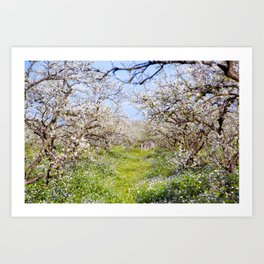 Plum flower, Photo Plum flower, Plum flower hill, beautiful view, Poster print, Canavas Print Art Print