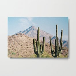 Cactus III / Scottsdale, Arizona Metal Print