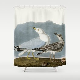 Vintage Seagull Illustration - Audubon Shower Curtain