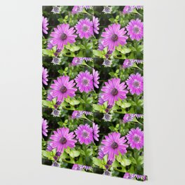 Longwood Gardens Orchid Extravaganza 40 Wallpaper