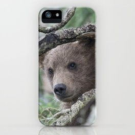 Baby Brown Bear Cub in Tree iPhone Case
