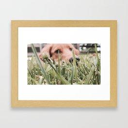 ollie golden Framed Art Print