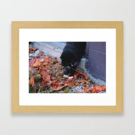 Cat As Well Framed Art Print