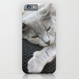 Shades Of Grey Cat Photo Portrait iPhone Case