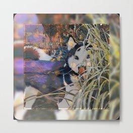 Husky Dream Metal Print