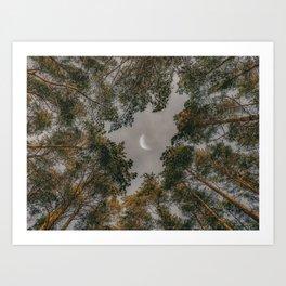 Moon through tree tops Art Print