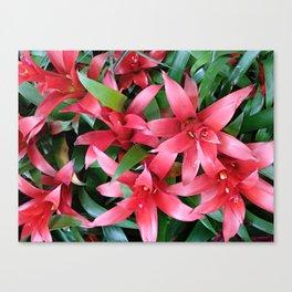 Red guzmania tropical flower Canvas Print