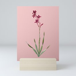 Vintage Bugle Lily Botanical Illustration on Pink Mini Art Print