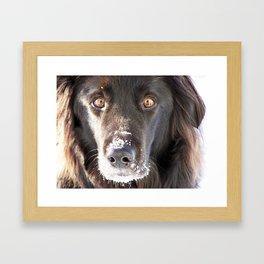 Dog Close-up Framed Art Print