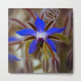 Borage flower  Metal Print
