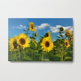 Sunflowers 11 Metal Print