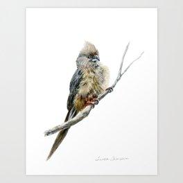 Speckled Mousebird by Teresa Thompson Art Print