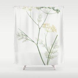 Fennel flowering plant from La Botanique de J J Rousseau by Pierre-Joseph Redoute (1759-1840) Shower Curtain