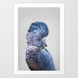 Black Cockatoo Art Print