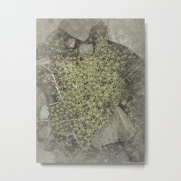 The tiny forest vintage Metal Print