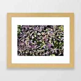 Tulsi Framed Art Print