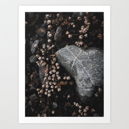 Wildflower Series - Tasman Glacier Art Print